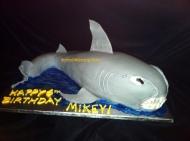 #129- SHARK!